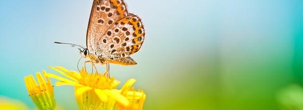 Butterfly-820x300