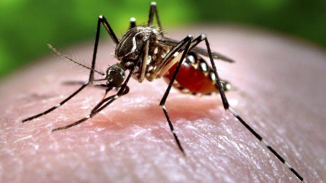 Zika_mosquito.jpg